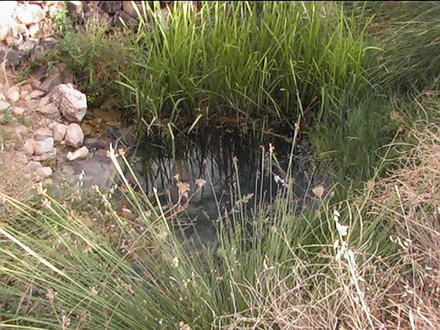 Nacimiento del Rio Jabalón en Montiel